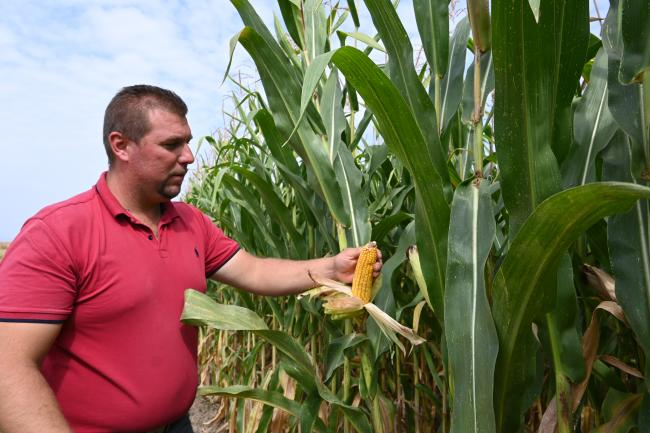 A farmer from Bitola is checking the corn crops before harvest